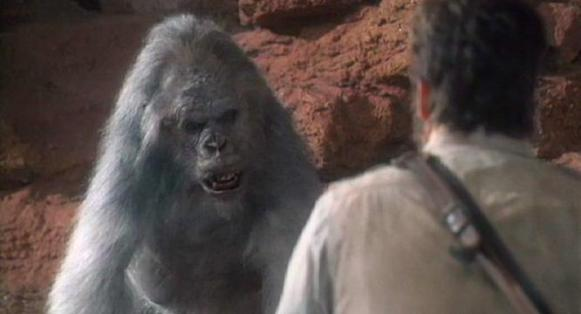 gorila gris 1