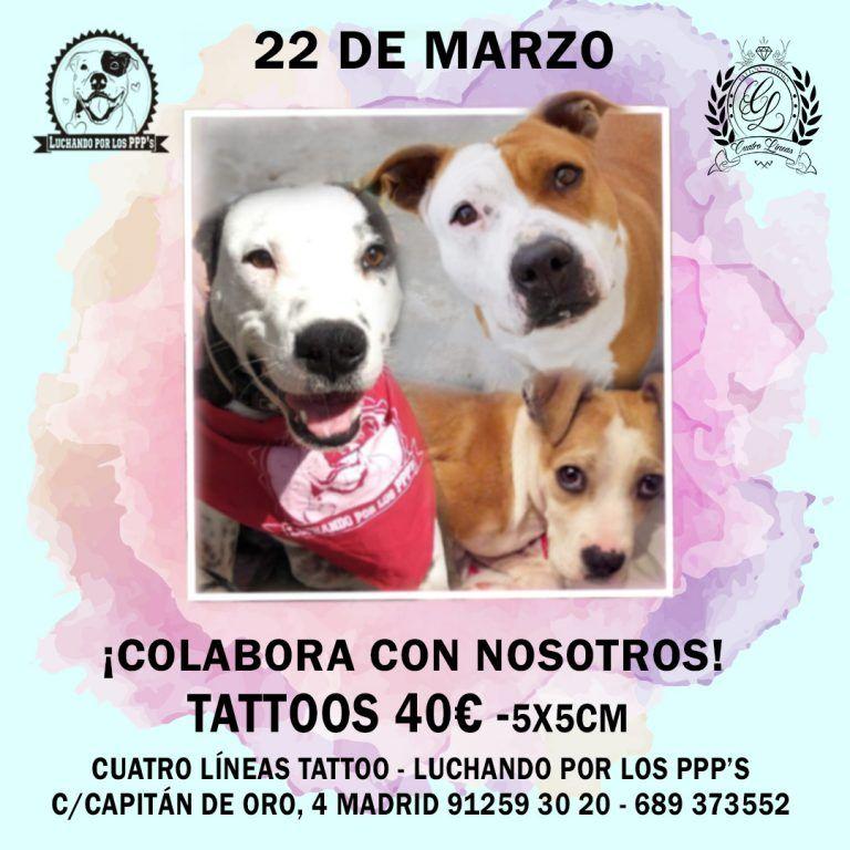tatuaje solidario 40 euros madrid tatuaje solidario perros potencialmente peligrosos madrid, tatuaje solidario