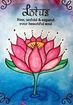 seeds of shakti lotus