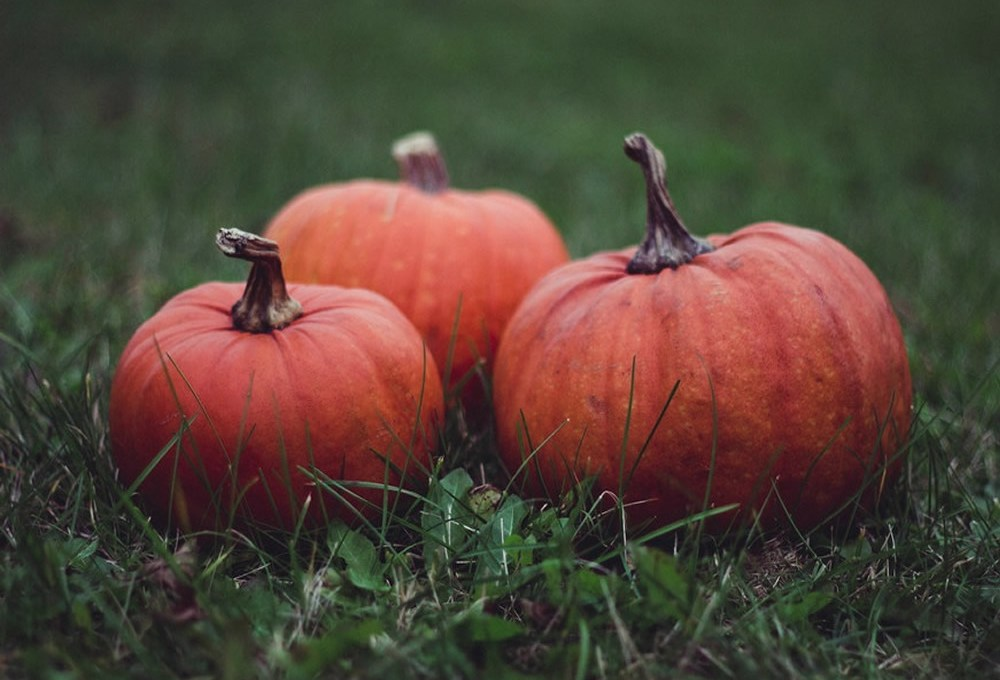 ¡Ya viene halloween!