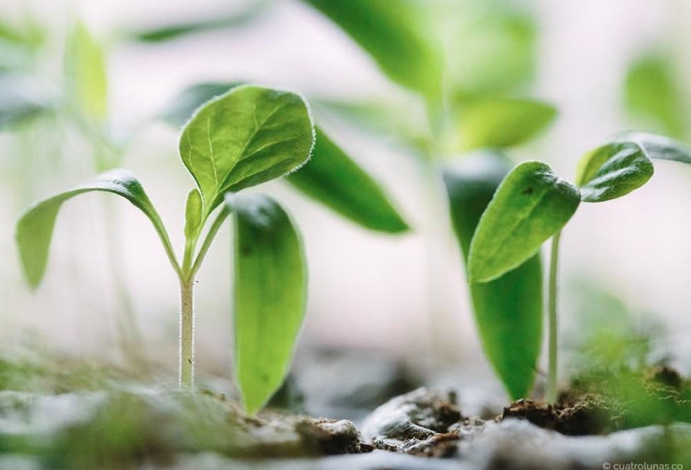 Las plantas y su magia