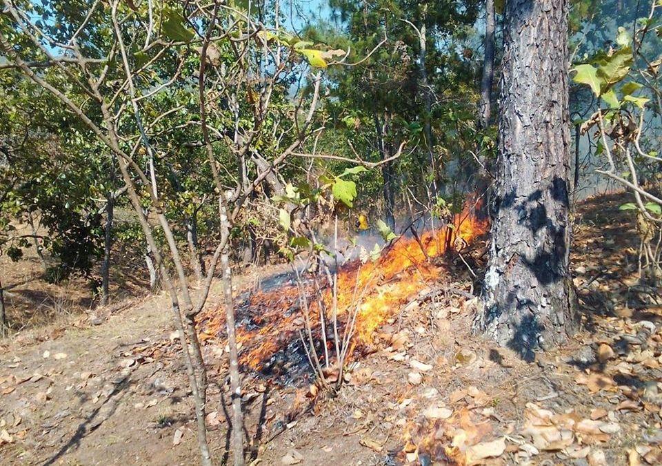 Acciones de prevención, control y combate de incendios forestales