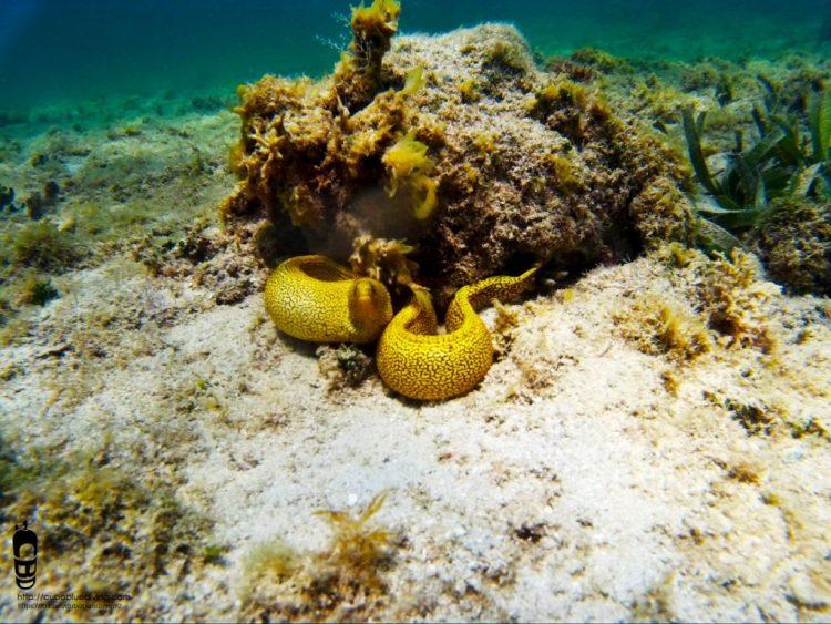 Morena bajo el mar
