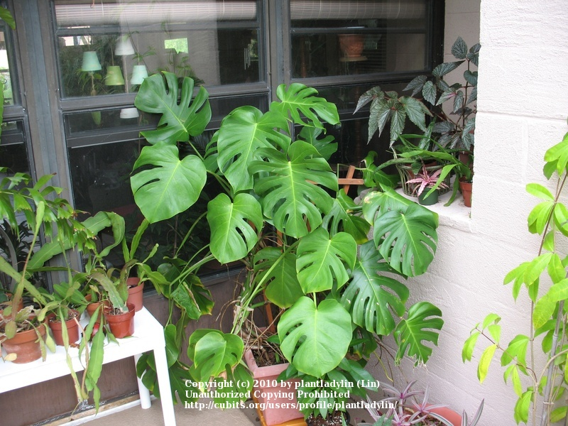 Indoor Plants For Dining Room