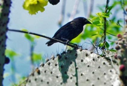 abby-kimball-gs-galapagos-2015-2016-1