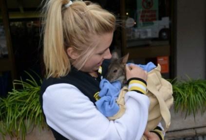 australia-sydney-by-kristin-ann-simboski-baby-kangaroo-unsw-spring-2012