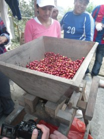 boliviags_by-lex-mobley-coffee-fruit-2013