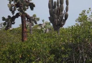 galapagosgs_by-kara-gordon-cool-cactus-2011