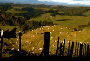 new-zealand-by-trent-bailey-northern-island-countryside-2007