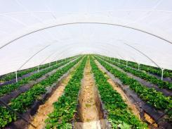 argentina-rosariogs_by-kristina-lu-strawberry-farm-2014