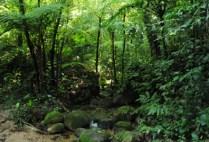 brazilgs_by-tim-kittel-atlanticrainforest-2011