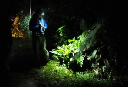 brazilgs_by-timkittel-night-walk-2011