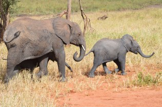 tanzaniags_by-laura-deluca-mom-and-baby-elephants