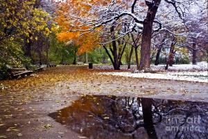 seasons-changing-sven-brogren