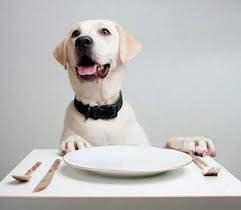 cane-che-mangia-a-tavola