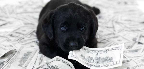 dog-eats-money-1