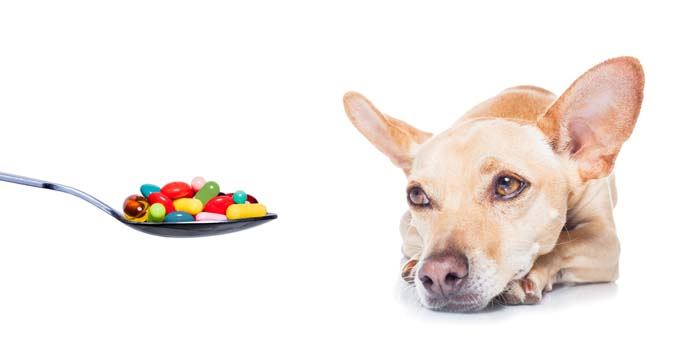 giving-a-dog-supplements