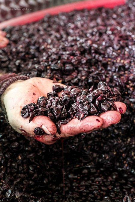 vino-fermentazione