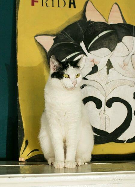 gatto sul piano