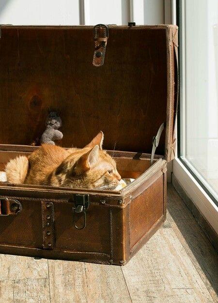 gatto in valigia