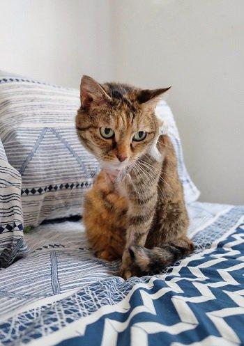 come adottare un gatto
