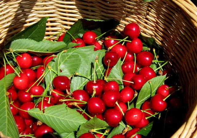 Una domenica di giugno in collina: confettura di ciliegie.