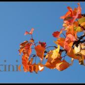 post dei bei propositi per l'autunno-inverno