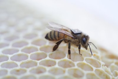 Bees4