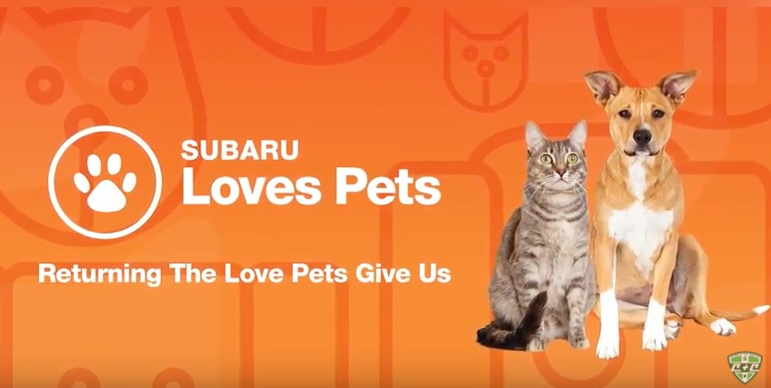 Hometown Subaru Loves Pets Events Video production by Cucumber & Company