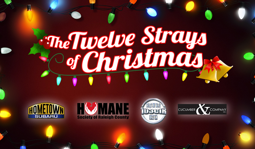 The twelve strays of Christmas sponsored by the Humane Society of Raleigh County Cucumber & Co Website Design and Video Production