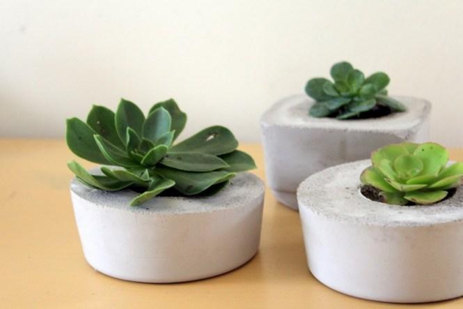 concrete planter succulents