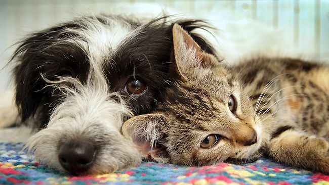 Unlikely pair: cat and dog