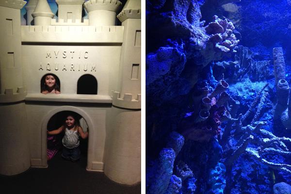 Mystic Aquarium inside