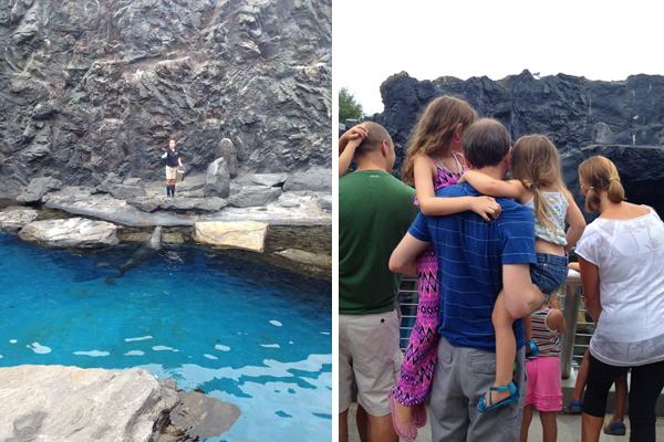Mystic Aquarium sea lions