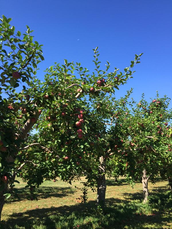 Fishkill Farms apple orchard