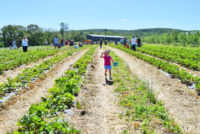 family fun in Westchester and the lower Hudson Valley Fishkill Farms