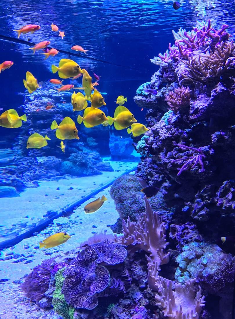colorful fish and coral at Mystic Aquarium