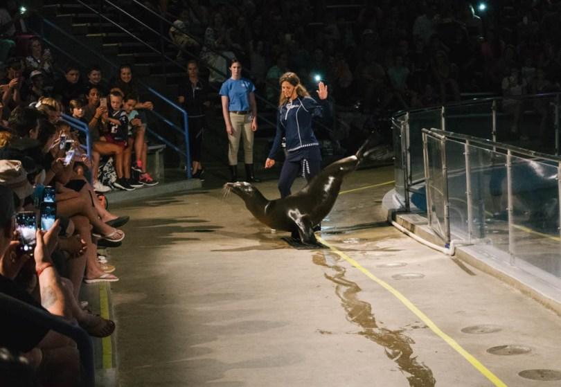 sea lion tricks at the Mystic Aquarium sea lion show