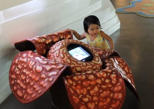 LittleMiss and The Rafflesia flower