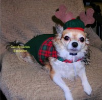 Dwarf Costumes For Dogs images