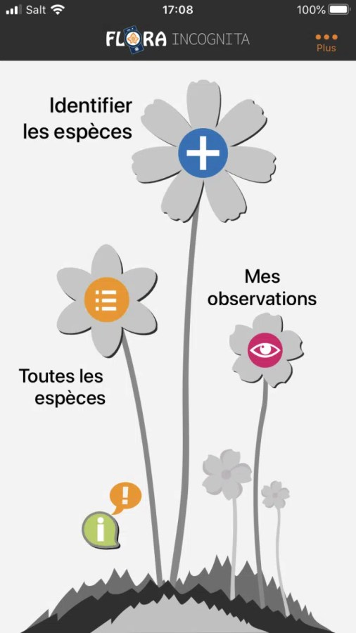 Flora incognita: une des meilleures application de reconnaissance des plantes sauvages