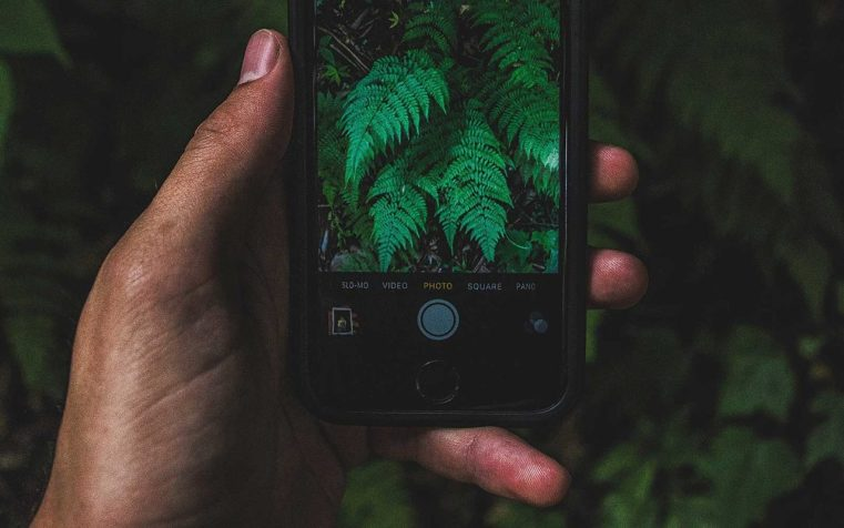 Un Iphone pour reconnaître une plante sauvage?