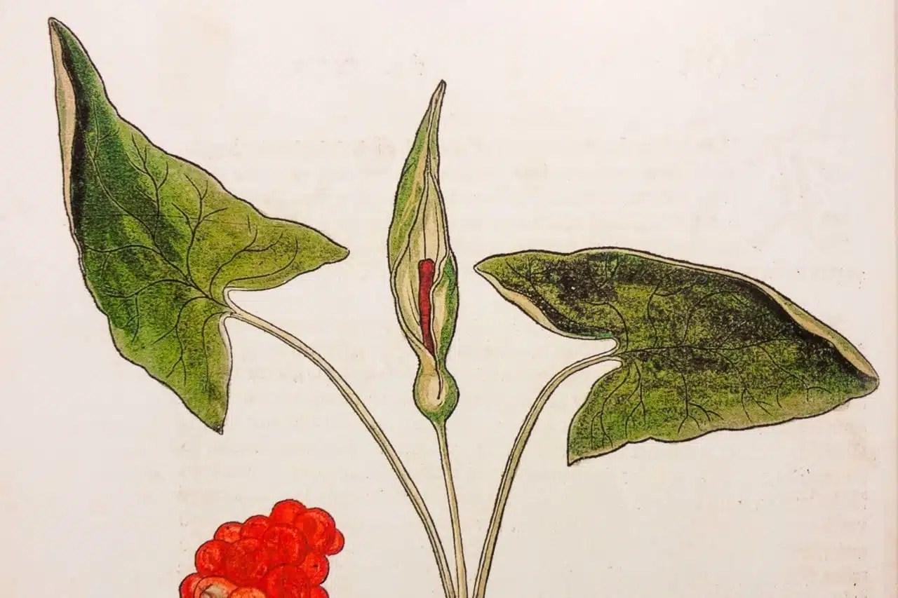 """Image à la une pour """"Les 12 plantes sauvages toxiques à connaître!"""""""