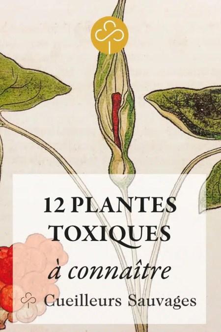 Les plantes toxiques sont fascinantes! Apprenez à les reconnaître vous gagnerez en confiance durant vos cueillettes. Découvrez 12 plantes importantes. Cueilleurs Sauvages