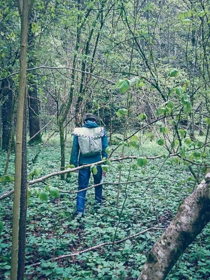 Cueillette de plantes sauvages en sous-bois forestier. Cueilleurs Sauvages.