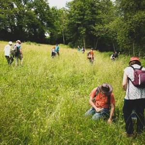 Cours de cueillette des plantes sauvages à la Sarraz par Cueilleurs Sauvages