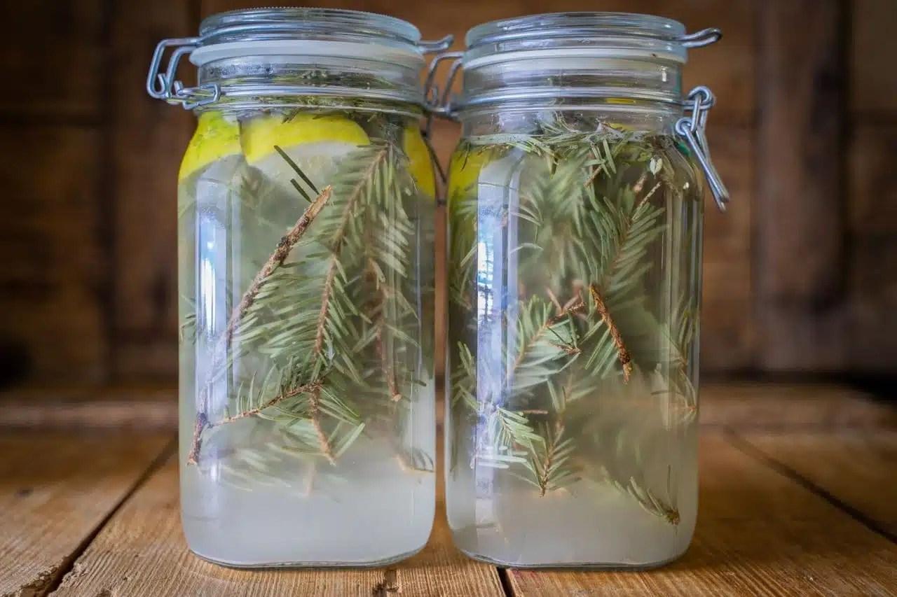 Voici une recette de cocktail sans alcool au sapin blanc. La récolte du sapin blanc est simple et peut se faire toute l'année, même en hiver. Cette limonade est idéale à faire pour un apéritif original et convivial, avec des enfants par exemple. Cueilleurs Sauvages.