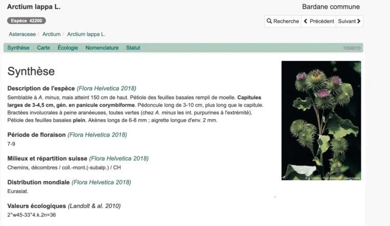 Arctium lappa sur infoflora