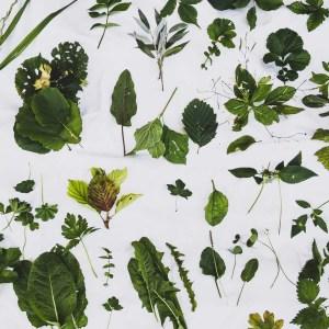 Conférence sur les bienfait des plantes sauvages comestibles, par Michaël Berthoud, Cueilleurs Sauvages.