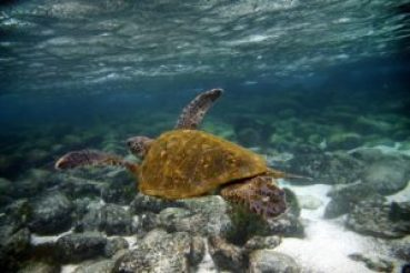 Griounded freighter still poses small environmental threat to the Galapagos.